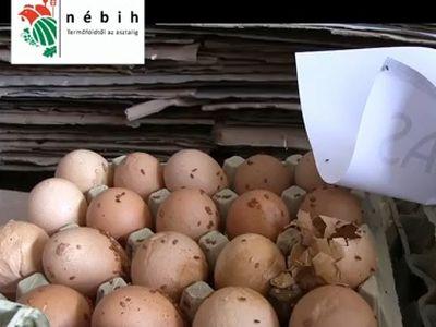 Nyüvektől hemzsegő tojásokat talált a Nébih! A boltokból is kerültek vissza lejárt és sérült tojások