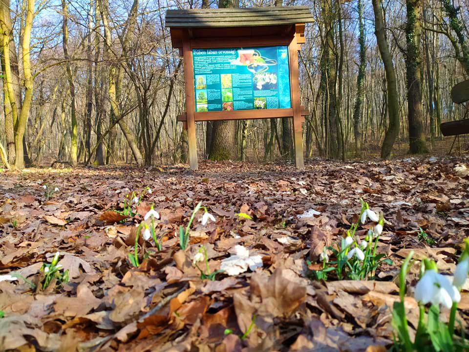 A legszebb kirándulóhelyek tavasszal : Ide még a járványhelyzetben is elmehettek a gyerekkel