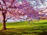 Tavaszváró versek