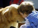 Kutyatámadások – Miért támad a kutya? Milyen kutya való gyerek mellé?