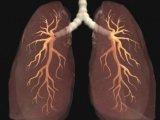 Kötelező tüdőszűrések listája 2012