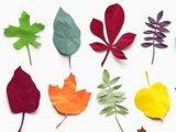 Mit csináljunk ősszel? - ötletek falevelekkel