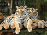Decemberben féláron mehetünk az Állatkertbe!