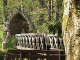 Szentjánosbogár-rajzás az Alcsúti Arborétumban! Június végéig tart a páratlan látványosság