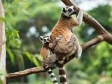 Állatkertek Éjszakája 2015: országszerte 12 helyszínen várják a családokat