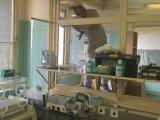 A kistarcsai szobafestő apuka tovább jótékonykodik: rászoruló kórházak kórtermeit festené ki ingyen