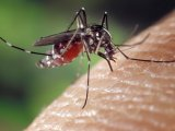 Szúnyog-, pók-, rovarcsípés: hogyan kezeld babáknál, kisgyermekeknél? Plusz úti patika lista, ha gyerekkel mész nyaralni