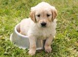 Állatok világnapja 2016: ingyenes programokkal várják a családokat október elsején az Állatszigeten