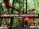 Lombkorona tanösvények: varázslatos helyek az országban, ahol a lombkoronák között sétálhatsz - Imádni fogják a gyerekek is!