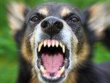 A család kutyája támadt rá az otthon lévő kisgyermekre! - Olyan súlyosan megsérült, hogy nem tudták megmenteni az életét