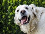 Játszótér, futtató, kutyamosó és vizes élménymedence: Ilyen lett a kutyás élménypark a Városligetben!