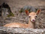 5 vadaspark Magyarországon, ami szuper őszi program lehet a gyerekekkel