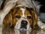 Petárdázás, tűzijáték szilveszterkor: így védd meg a kutyádat, hogy ijedtében ne szökjön el otthonról - Szakember tanácsai
