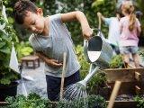 Pályázat alsósoknak: Tervezz és ültess egy virágágyást! - A nyertes csapat a budapesti Városháza parkot díszítheti fel