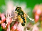 Méhcsípés-, darázscsípés-allergia: A kalcium semmit sem ér ellene! - Mi a teendő anafilaxiás reakció esetén?