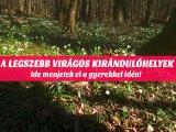 Tavaszi bakancslista gyerekkel: A legszebb kirándulóhelyek az országban, ahol már nyílnak a tavaszi virágok