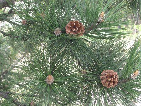 Pénzt a karácsonyfa alá? Jobb ötleted nincs?