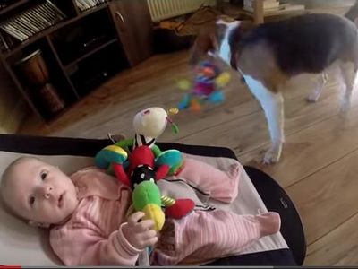 Videó: így kér bocsánatot a kutya, amiért elvette a kisbaba játékát