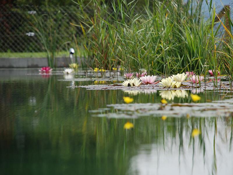 Víz alá merülve, a kerti tóban találtak rá a szülők a kisfiukra - Csak pár percre hagyták magára, kis híján tragédia lett belőle