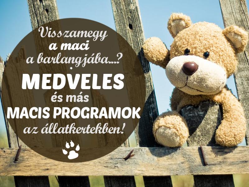 Macis programok 2018: Medveles, medve napok, állatok farsangja az állatkertekben - 7 tuti hely, ahova vidd el a gyereket!