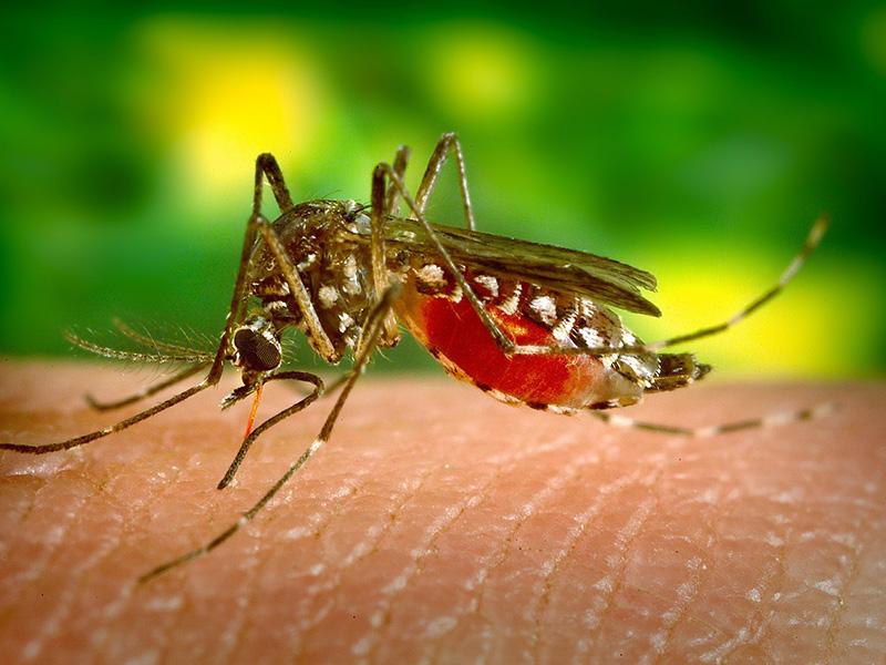 Nyugat-nílusi láz: akár Magyarországon is megfertőződhetsz, ha megcsíp egy szúnyog! - Tünetek, szövődmények, kezelés