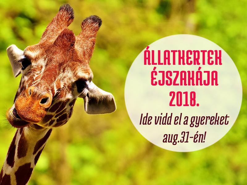 Állatkertek éjszakája 2018: Ezek az állatkertek és vadasparkok várnak éjszakai programokkal augusztus 31-én! - Vidd el a gyereket, imádni fogja