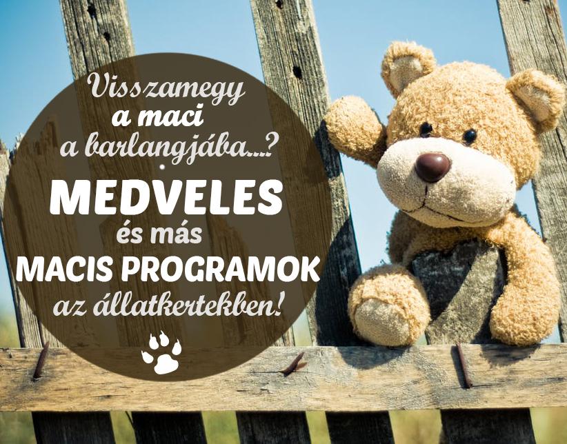 Mackós programok 2019: Medveles, mackófesztivál, medve napok az állatkertekben! - Hova menjetek a hétvégén?