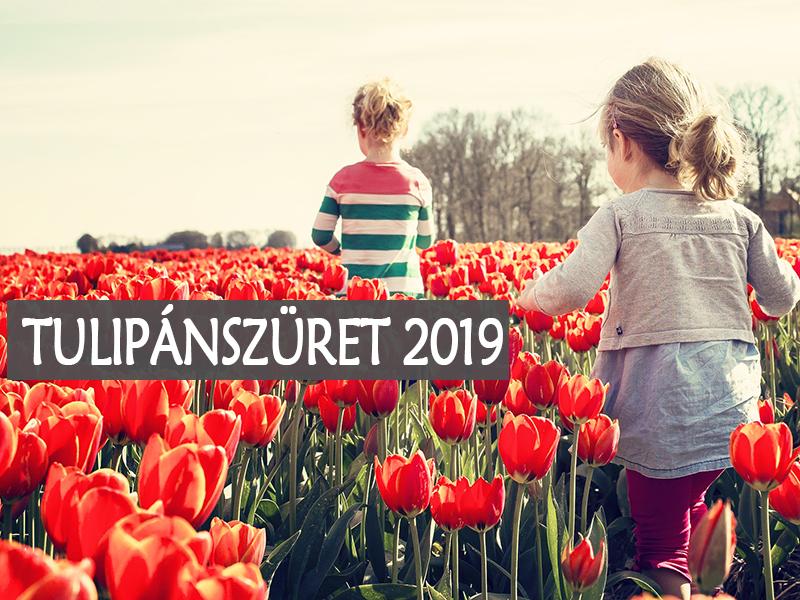 Tulipánszüret 2019: 3 helyszín, ahol tulipánt szedhetsz az országban, és belépőt sem kell fizetned! - Hétvégi programnak tökéletes
