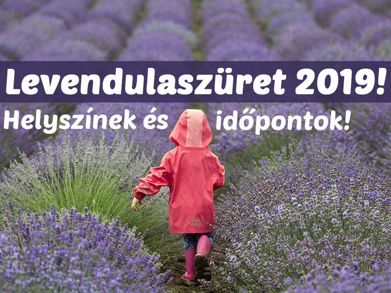 Levendulaszüret és levendulafesztivál 2019: 10 helyszín és időpont, ahol levendulát szedhetsz vagy fotózkodhatsz